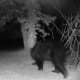 This bear was captured on camera on Gold Road in Stormville.