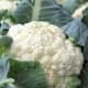 E. Coli Recall Now Includes Cauliflower, More Leafy Greens