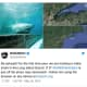 Great White Shark Tracked Off Long Island Sound Off Fairfield County Coast