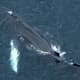 Whale Frees Itself From Fishing Net Off Long Island Coast