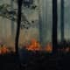 Massive Forest Fire In Ocean County Doused By Tropical Storm Fay