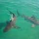 Police Intensify Air, Water Patrol On Long Island After Shark Sightings