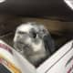 A rabbit was found abandoned in a box outside Pet Valu Store on Route 22 in Patterson.