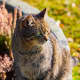Aggressive, Stray Cats Reported In Montville
