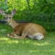 Rare Virus Killing Deer In Hudson Valley