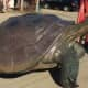 Huge Turtle Sculpture Stolen From Front Yard Of Long Island Home