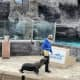 Woman Jumps Into Sea Lion Tank At Long Island Aquarium In Suffolk