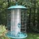 Take Down Birdfeeders: Mysterious Illness Killing Songbirds In Connecticut, Massachusetts