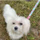 'Dogged' Detective Work Leads To Recovery Of Pet Stolen In Fairfield County