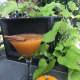 Smashing Pumpkin cocktail from Ho-Ho-Kus Inn.