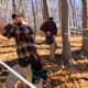 Workers prepare the trees at Madava Farms for the upcoming maple season.