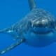 New Shark Sightings Reported At Jones Beach Day After Lifeguard Bit