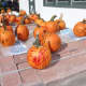 Painted pumpkins on display at the Ambler Farm fall festival on Sunday.