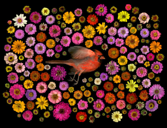 """Detail of """"Cardinal"""" by Portia Munson, one of the contemporary artists exhibiting in this year's edition of the Lyndhurst Flower Show. Courtesy the artist."""
