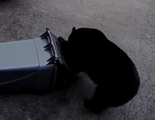 A black bear was seen in Brewster looking for a little snack.