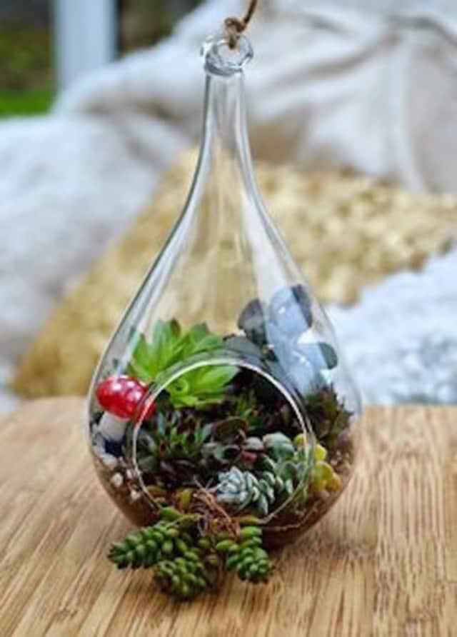Learn how to make a home terrarium at Abmas Farm.