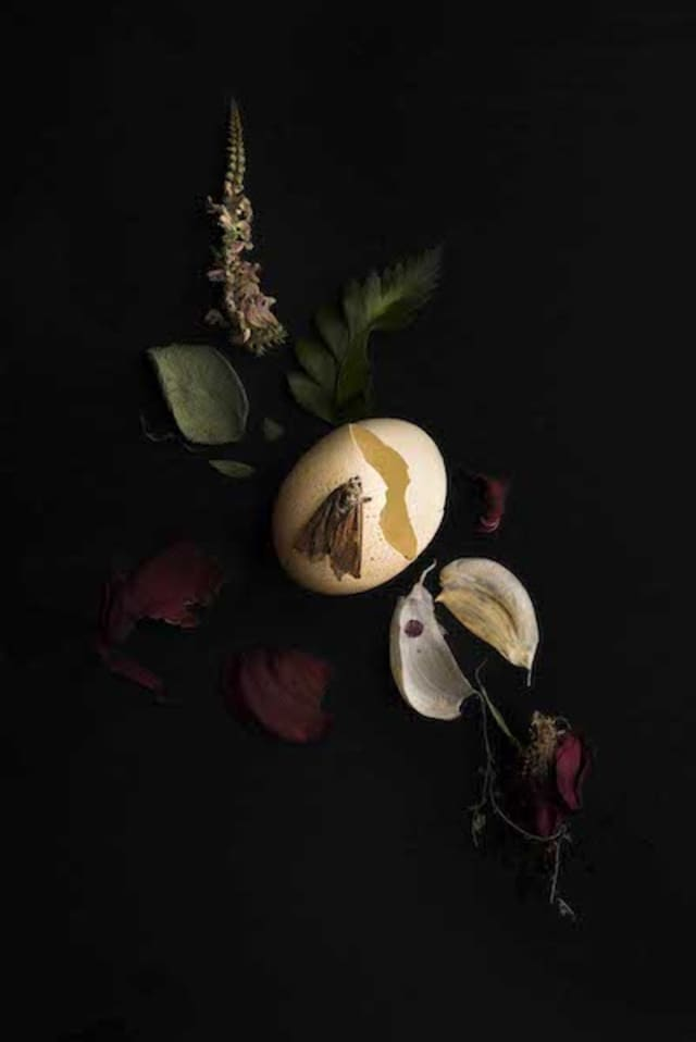 """Photographer Meghan Spiro will exhibit her work at Hudson Beach Glass in """"Bella Monnezza."""" The show will include this work that features egg, garlic, sage, rose and florals. Courtesy and © Meghan Spiro."""