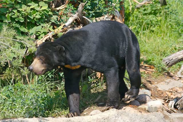 The bear hunting season has been extended in New Jersey.