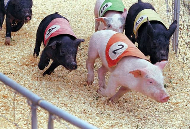 Thousands have signed a petition to stop pig racing at the Meadowlands.