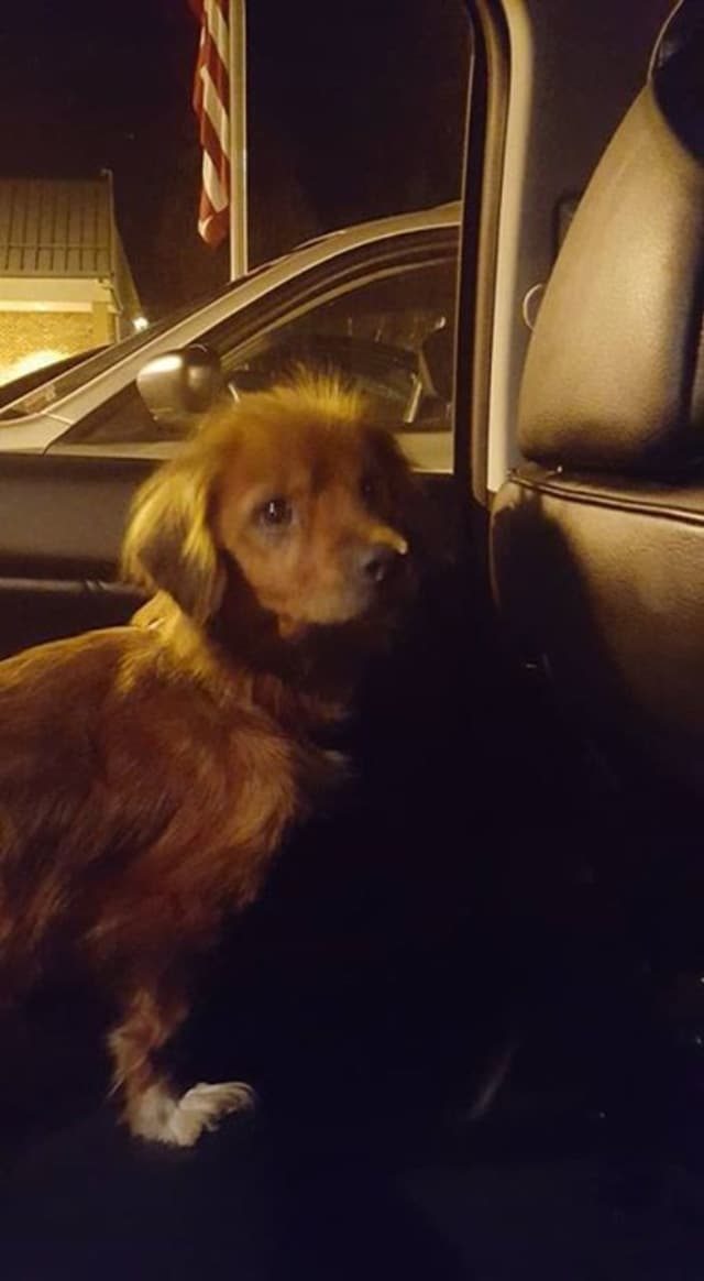 Anyone with information about this lost dog should call the Pawling Animal Clinic.