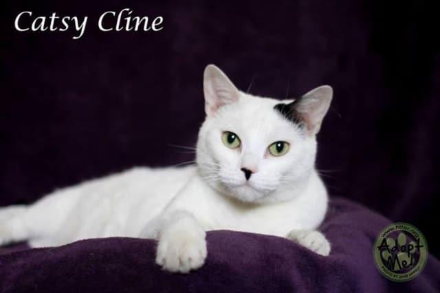 Catsy Cline needs a home.