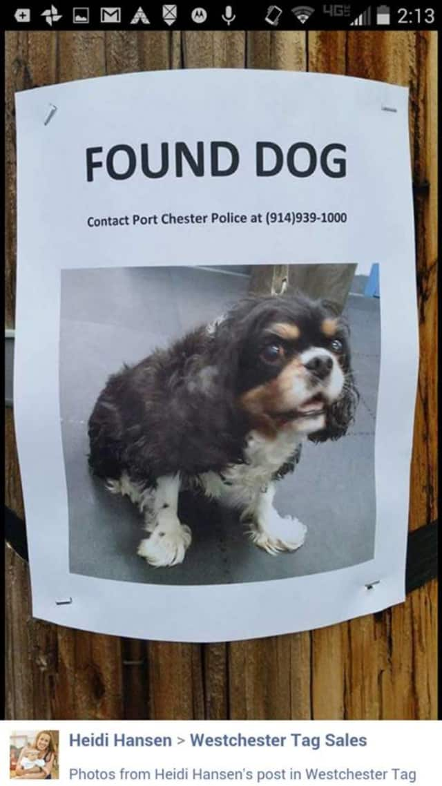 Anyone who may be able to identify the owner of this dog should contact Port Chester police at 914-939-1000.