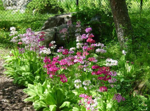 Spring nature walks in Ringwood.