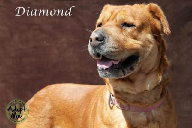 Diamond is available for adoption.