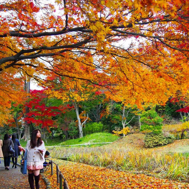 The colors of fall are coming to area foliage early this year thanks to the dry weather.