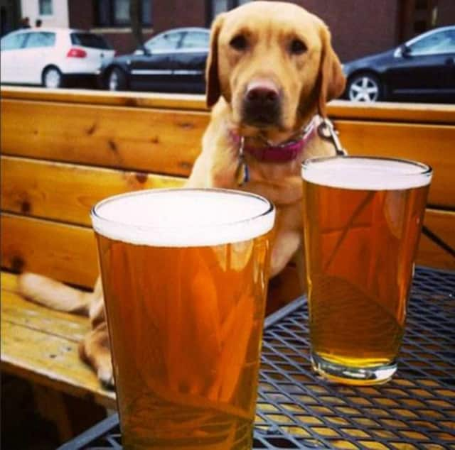Some restaurants in New York can allow dogs to dine outside with their owners.