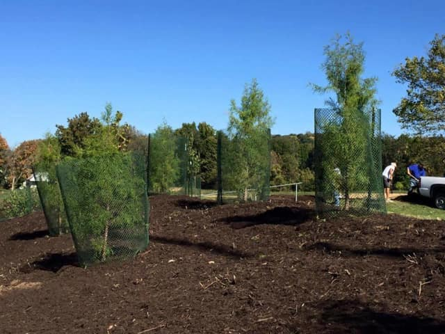 The New Jersey Tree Foundation offers these tips to prepare your trees for winter.