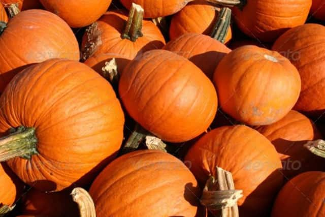 Pick pumpkins and enjoy hay rides in Ridgefield this Halloween at a community event.
