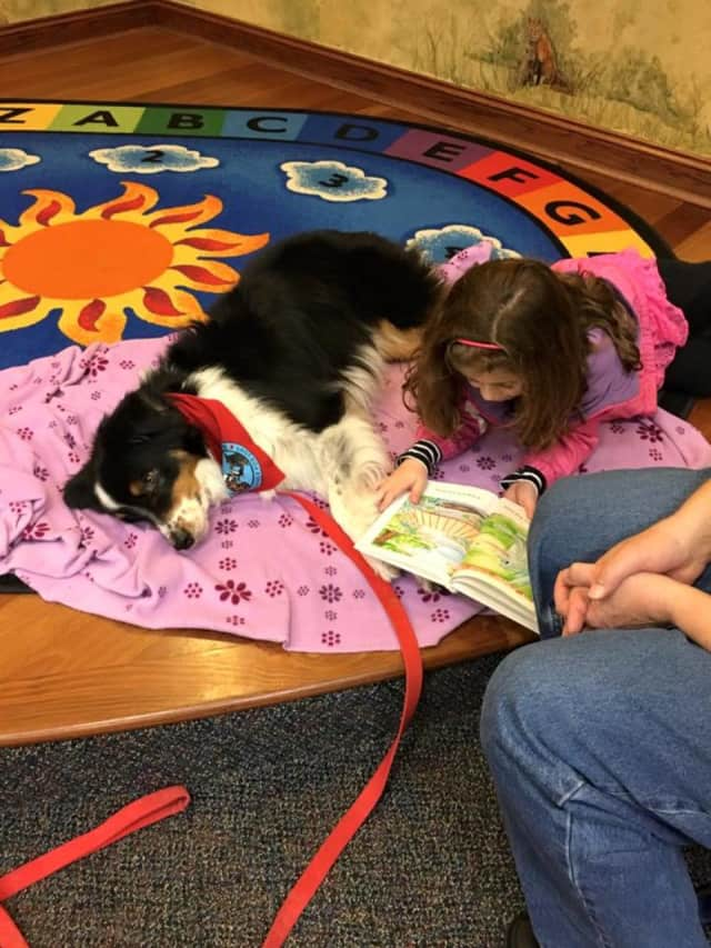 """The Beekman Public Library is very happy to have """"Tucker"""" the dog back at the library."""
