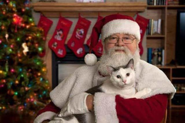 Pets have Christmas lists too.
