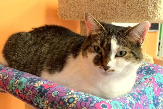 Ellie is one of the cats that will be up for adoption at the Animal in Distress adoption open house on Saturday.