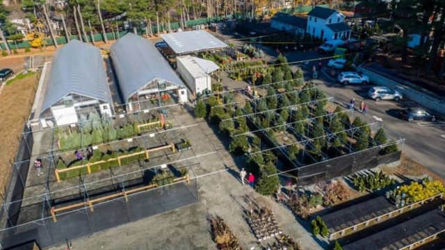 Metropolitan Farm in Closter continues Christmas tree sale.