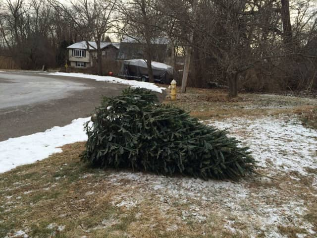 The Teaneck DPW will begin Christmas tree pickup this week.