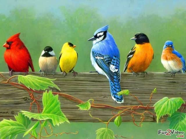 The Pleasant Valley Library will offer a free class on birding on Tuesday.