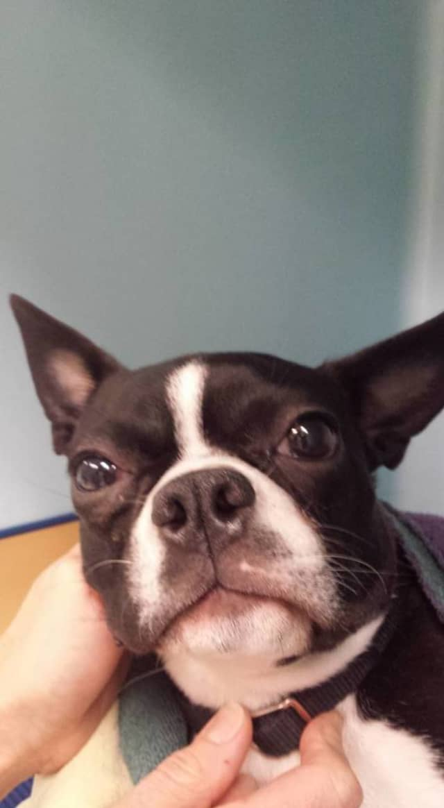 This dog was found on the side of the West Side Highway on Thursday, Jan. 14.