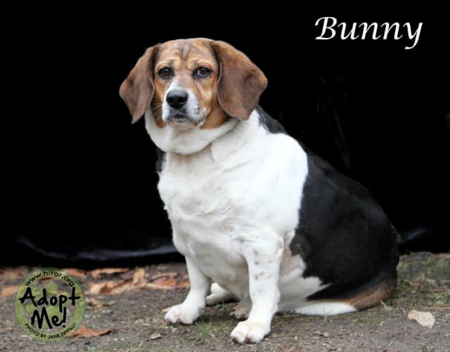 """""""Bunny"""" is the Hi Tor Animal Care Center Pet of the Week."""