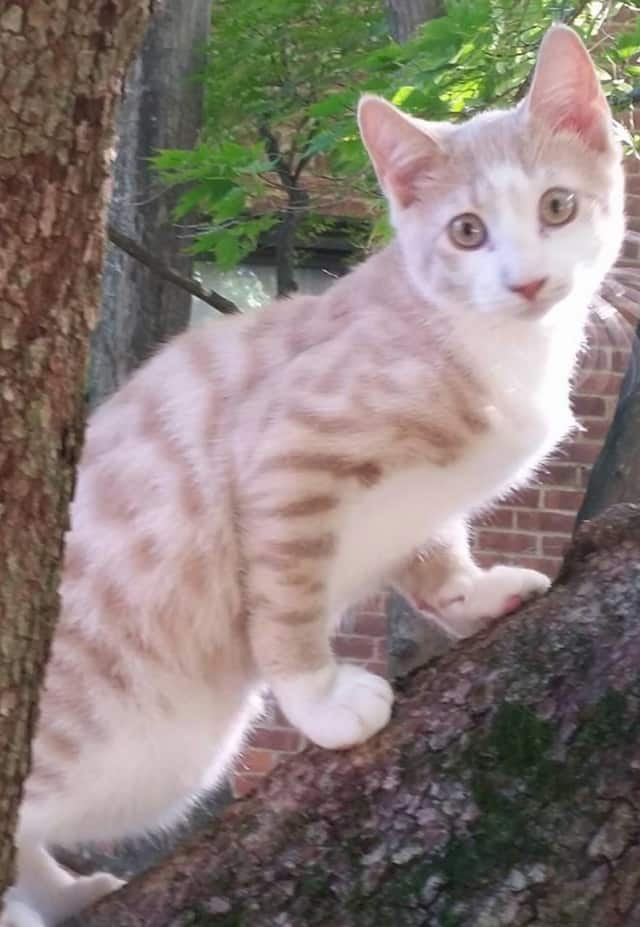 "Lost Pets of Westchester County has posted on Facebook that it is seeking the whereabouts of ""Zack,"" a cat, who has been missing since Feb. 1 from Tarrytown."
