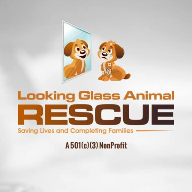 Looking Glass Animal Rescue launched in Ridgefield in December 2015 is looking for volunteers and support.