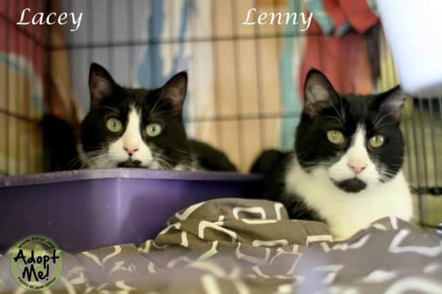 Lacey and Lenny