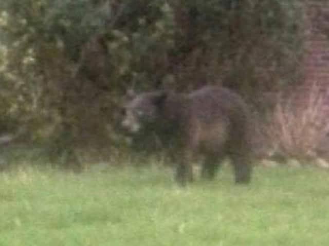 The Washington Township bear.
