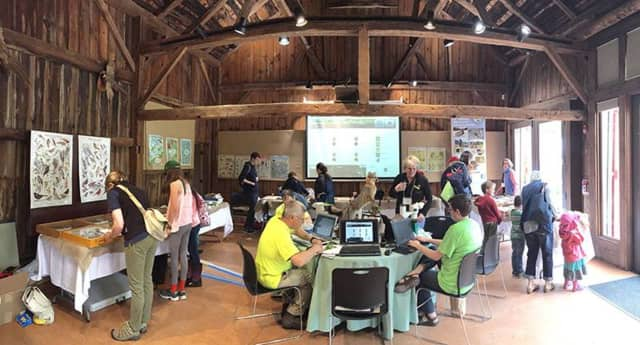 The Science Center in Burlingham Barn is the hub of species identification and data entry for the BioBlitz at Weir Farm, which is located in Wilton and Ridgefield.
