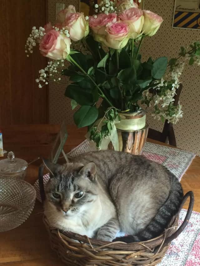 Leo the cat is missing from a New Castle home.