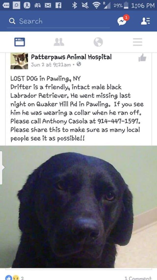 Drifter, a black Labrador Retriever, has been missing since Thursday, June 3.