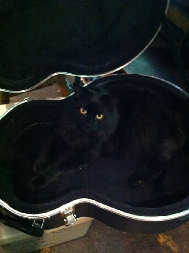 Dave, the black cat, is missing from the Ossining area.