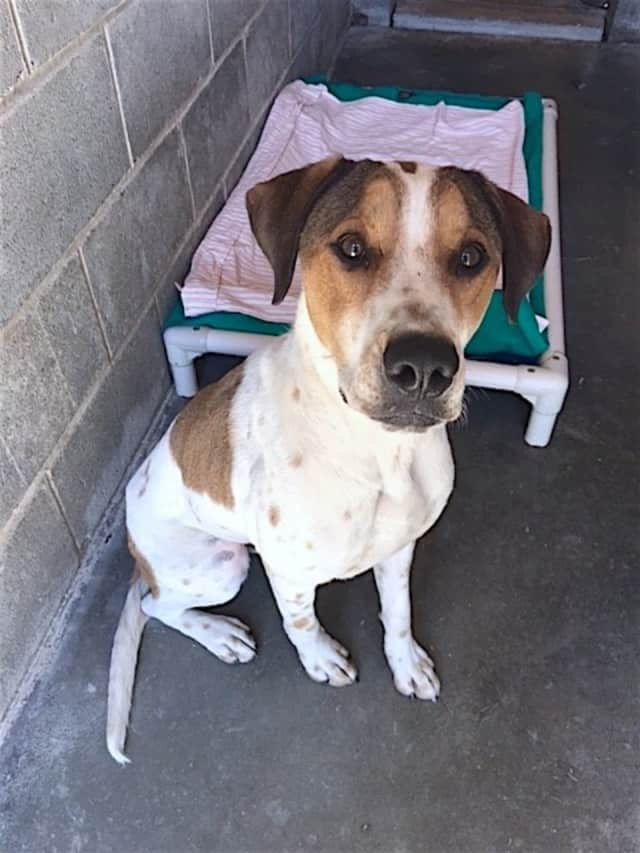 This dog was found in Garrison.