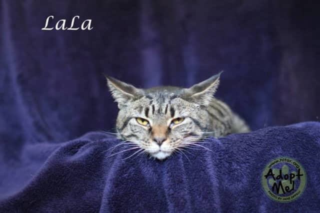 LaLa the cat is the Hi Tor Pet of the Week.